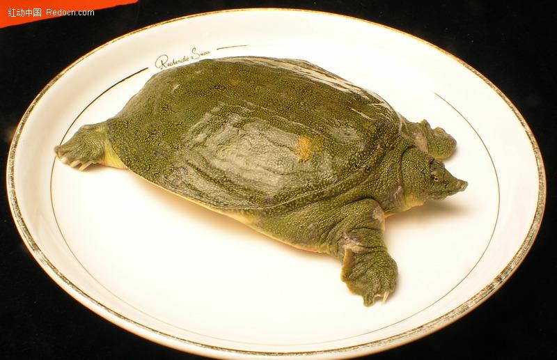 王八犊子图片,野生王八图片,王八和乌龟的区别图片 ...