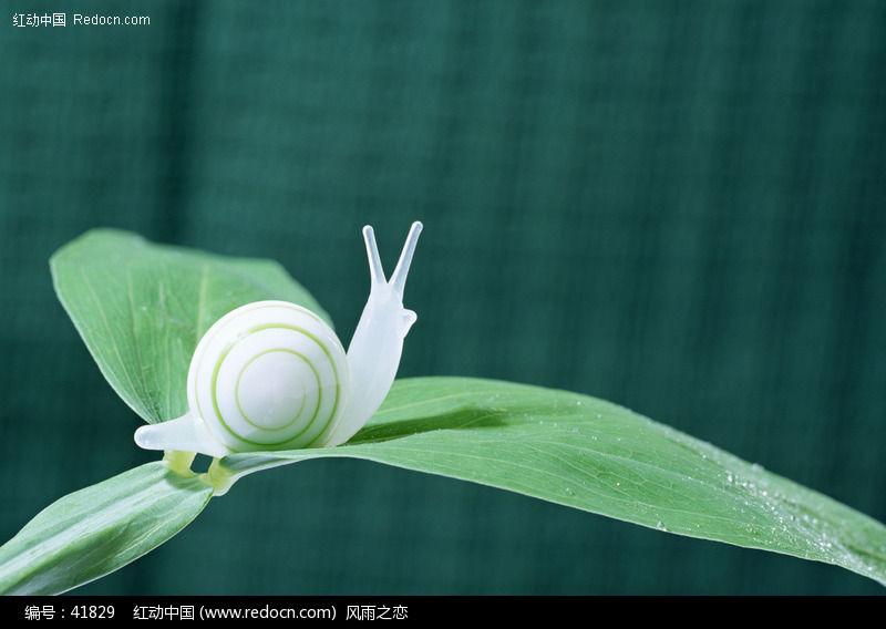 {与蜗牛有关的励志文章}.