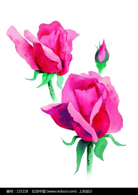 易画玫瑰花朵的图片_玫瑰花水彩画图片大全 _排行榜大全