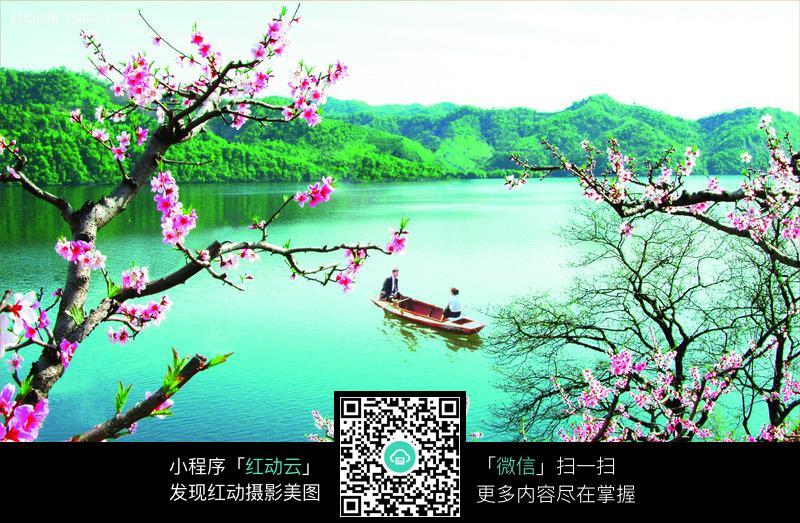 桃花朵朵开图片 风景图片 图片库 图库下载编号