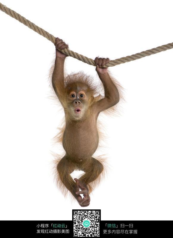 可爱的小猴子图片设计图片