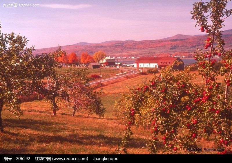 秋天丰收景象的词语 描写春天美景 秋天丰收 冬天景色的词语有哪些图片