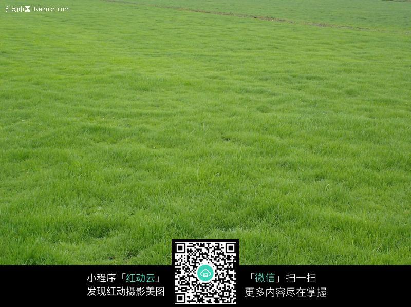 足球 场绿色草皮图片 编号 225408 高清图片