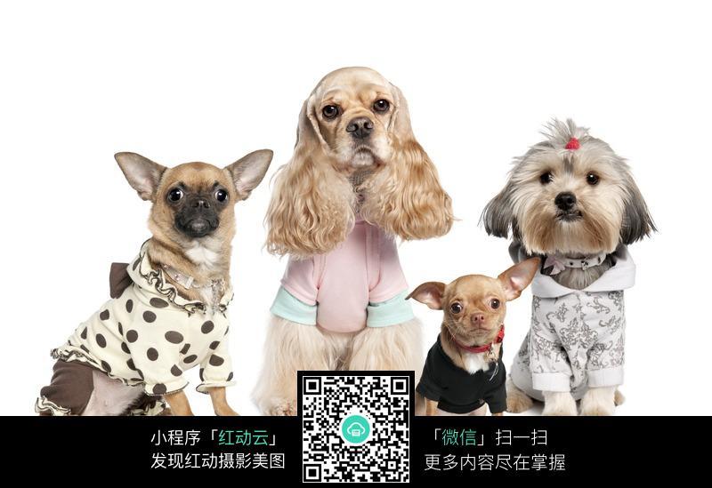 四只宠物狗狗图片-陆地动物-生物世界-图片素材