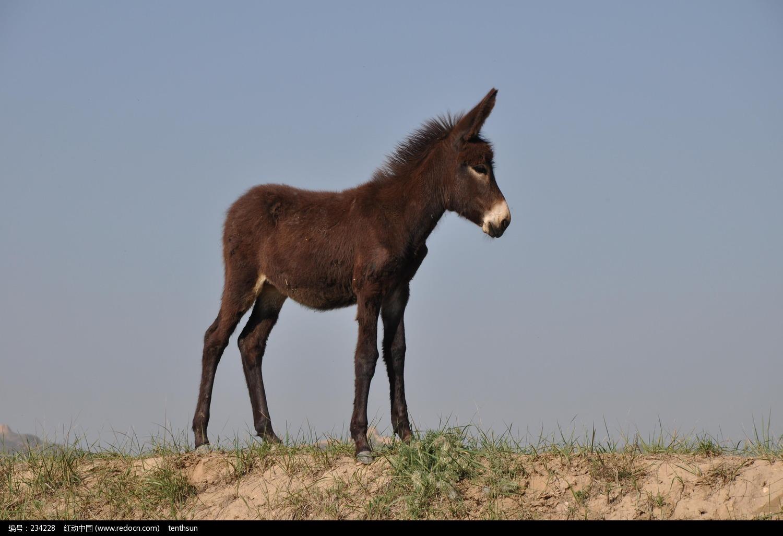 驴 摄影 图片 欣赏 编号 234228 驴 专业 图片 素材 下载 ...