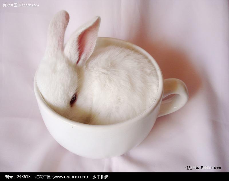 白兔   白兔   摄影图__家禽家畜   小   白兔   简笔画 - 高清图片