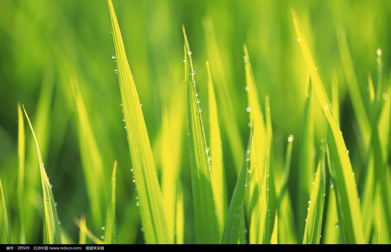 蓝天白云绿草桌面壁纸,绿草爱心电脑桌面壁纸,绿草桌面壁纸,蓝天绿草