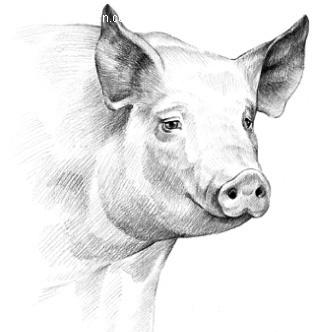 图(编号:308167)_陆地动物图片