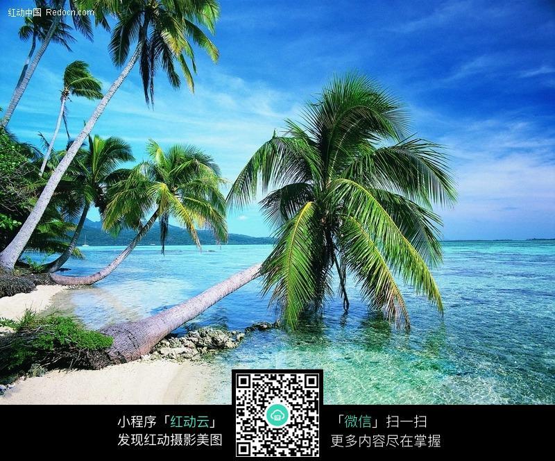 夏日 椰树设计图_动漫卡通背景_风景漫画_动漫-海边椰子树风景图片,