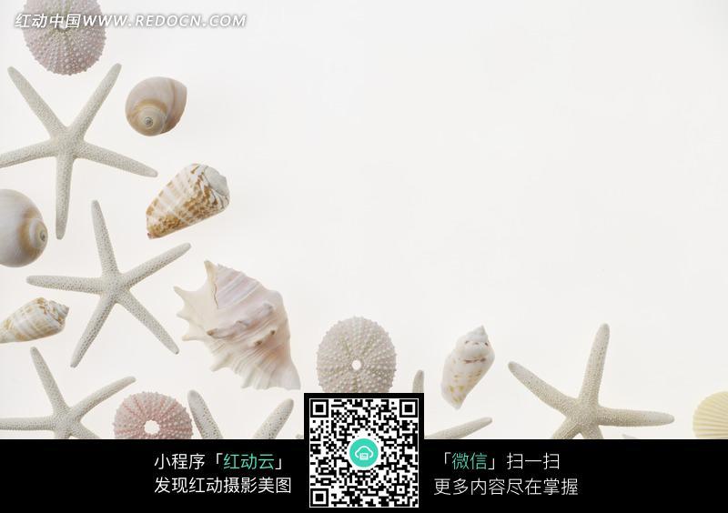 排成弧形的海星/海螺设计图片图片