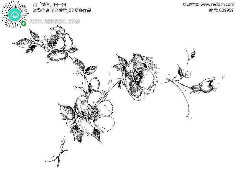 素描图片简单一点的花-手绘素描花朵插画稿件欣赏图片