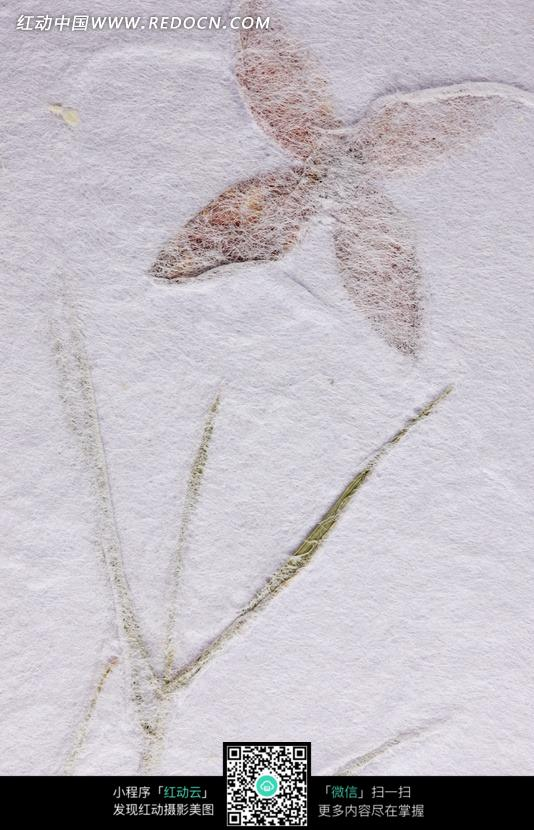 白底树叶和枝干背景纸张图片