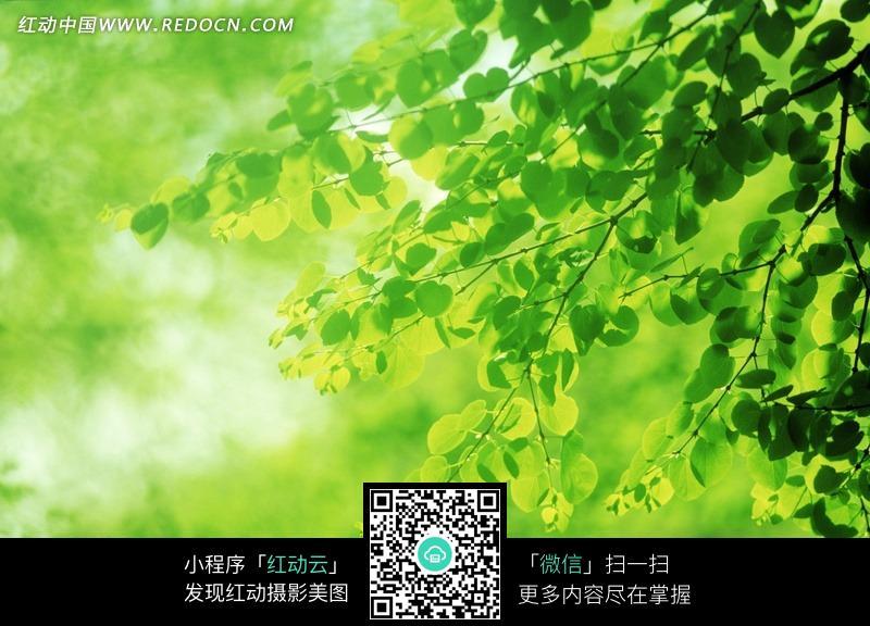 绿色树叶图片素材