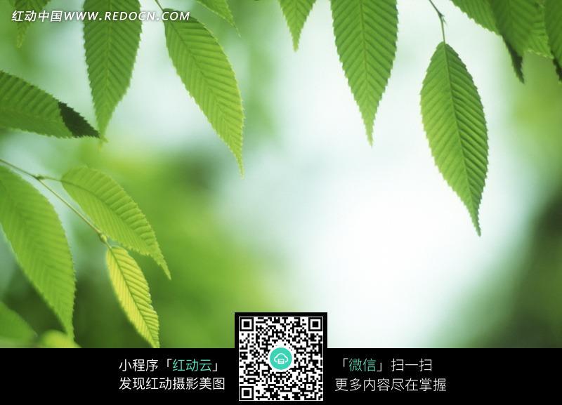 模糊绿叶背景图片大全_模糊绿叶背景图集分享图片