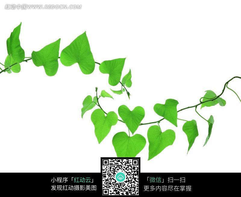 藤蔓花卉植物装饰边框psd分层素材 大图网设计素材