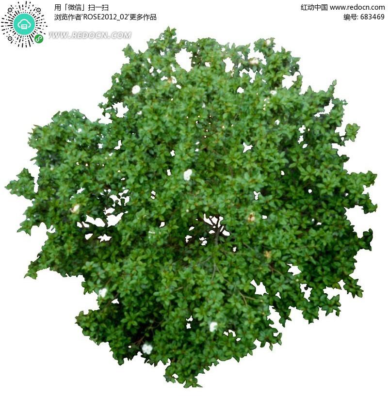 平面景观植物抠图素材(编号:683469)图片