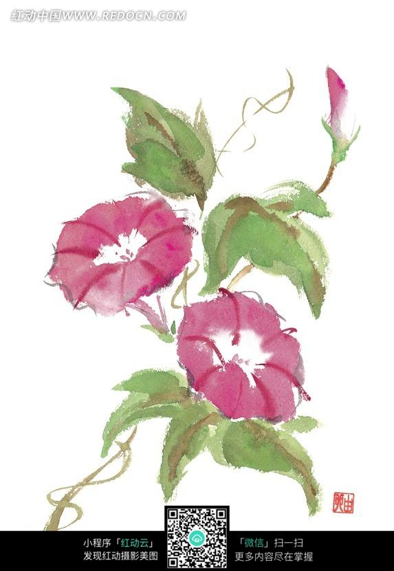 喇叭花叶子图片_紫色牵牛花和叶子插画图片花纹花边线条背景