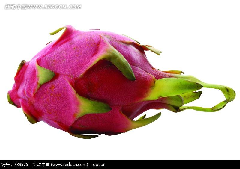 一个火龙果设计图片图片