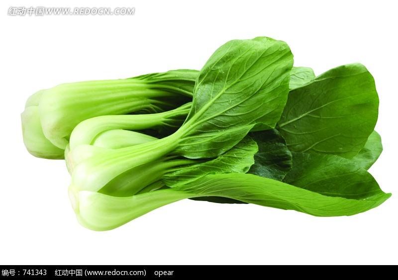 两颗新鲜的小油菜图片(编号:741343)_食材原料