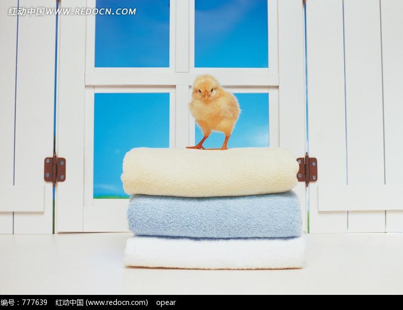 站着三条叠放整齐毛巾上的小鸡图片(编号:777