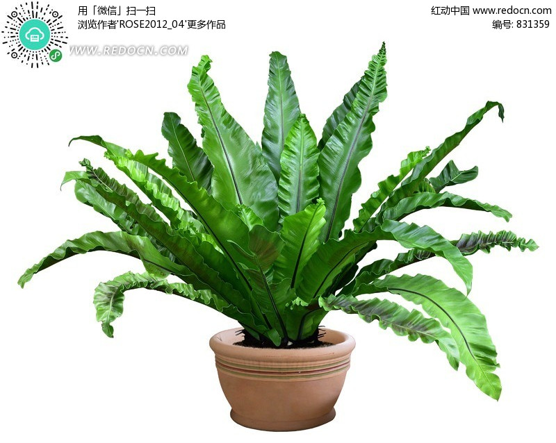 绿色景观植物盆载盆景psd抠图素材(编号:831359)图片
