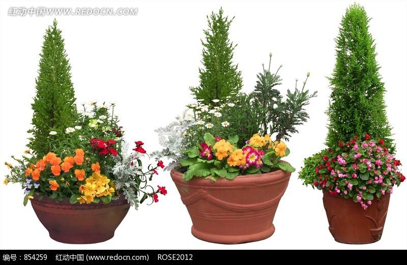 装有各种彩色花朵的盆栽摄影照片图片