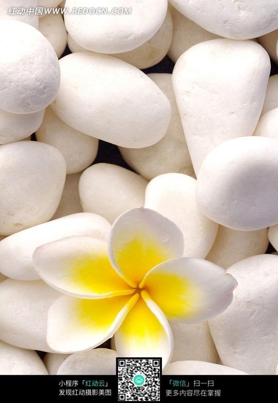 石头上的美丽花朵图片图片-漫画插画|绘画图片下载