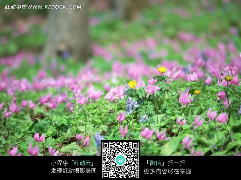 户外植物花朵绿叶摄影照片