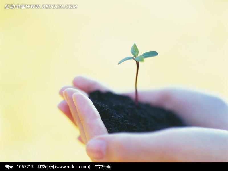 双手捧着土壤绿苗