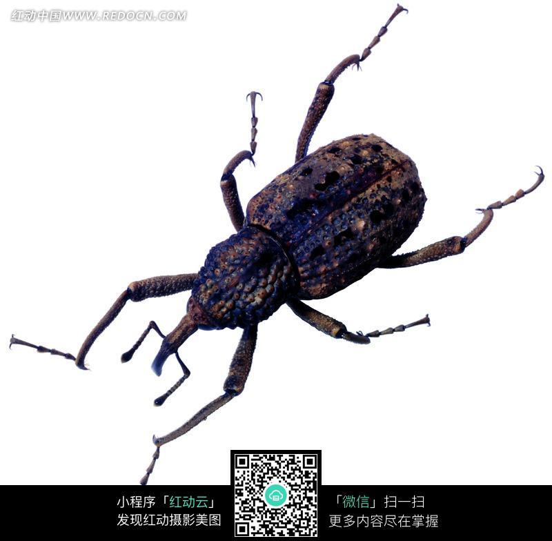 昆虫标本》 [ 1.61 mb]