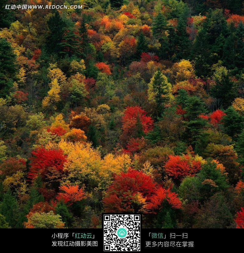 茂密山林里各种颜色的树