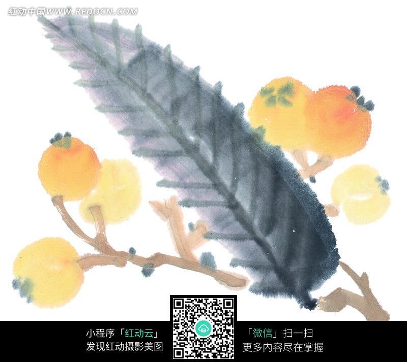 树叶画边-叶子边枝头上的 枇杷果 水墨 画图片 花纹 花边 线