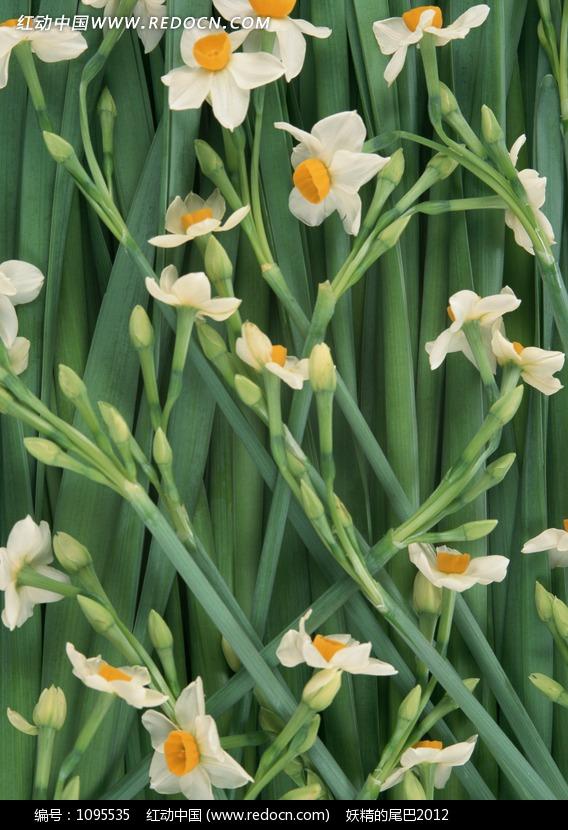 绿叶上白色花朵植物