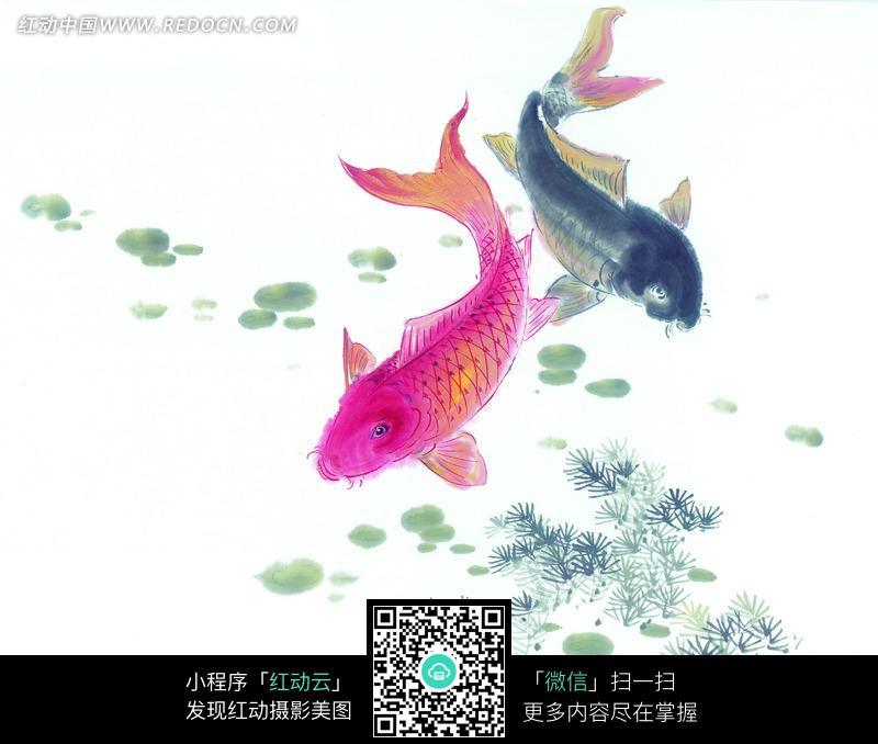 荷花鱼动态图片_图片大全