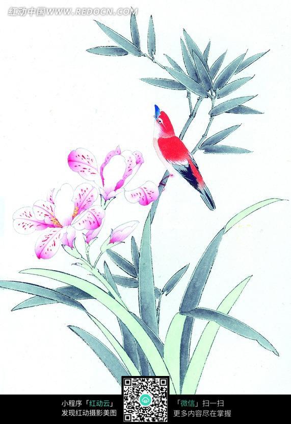 兰花上的红色小鸟工笔画