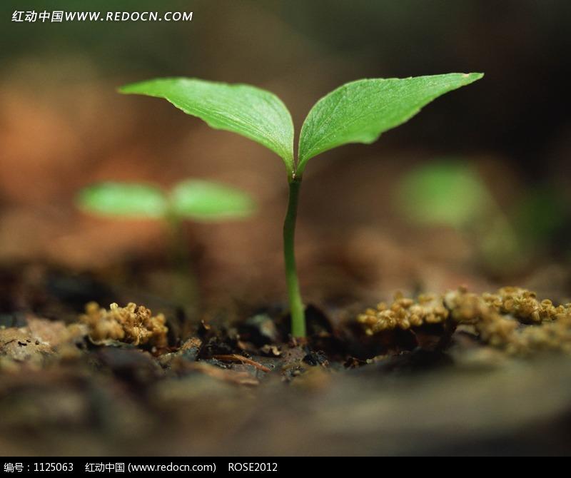 土壤生长的绿苗图片-动物|植物|生物图片下载(编