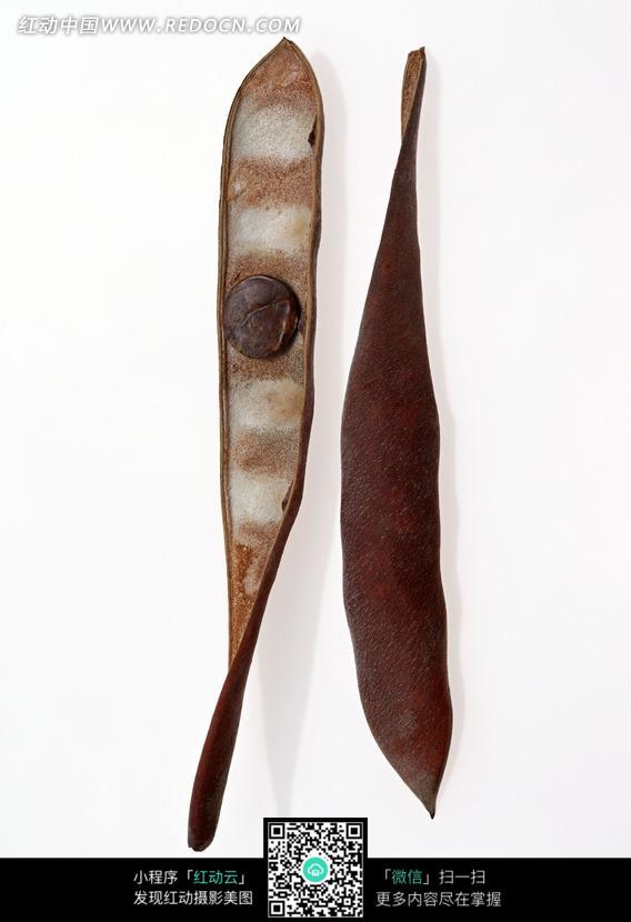 枯黄干瘪的豆角设计图片