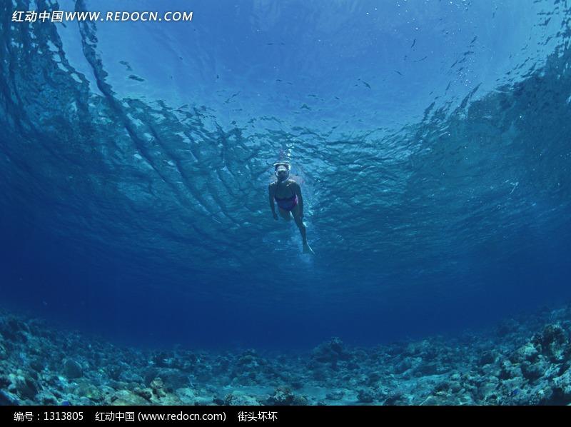 浅海潜水的美女蛙人设计图片