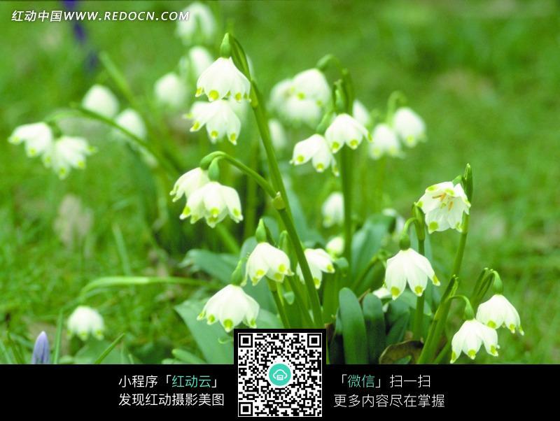 美丽的白色绿叶花朵植物