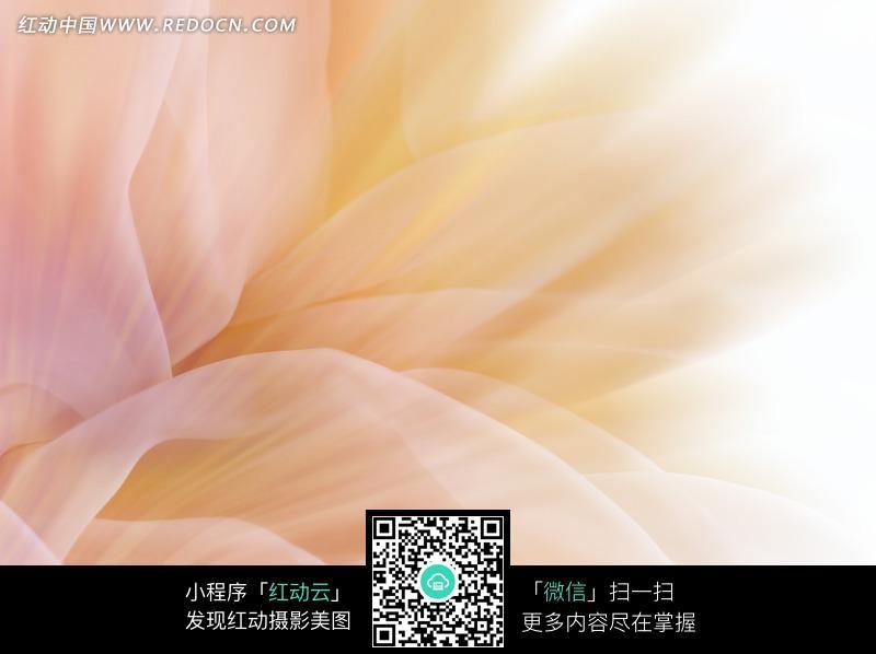 白色长叶条带纹背景图片 1384051 背景花边