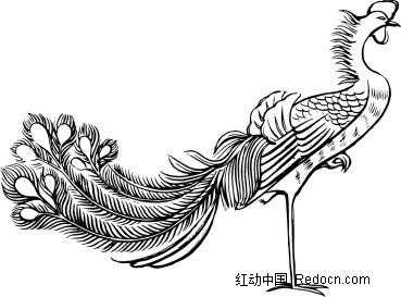 手绘站立的孔雀-矢量花纹|矢量花边素材下载(编号:)图片