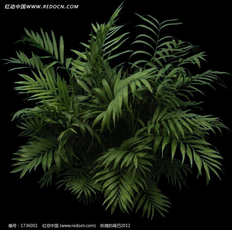 室内景观树名称_一棵室内景观树设计图片