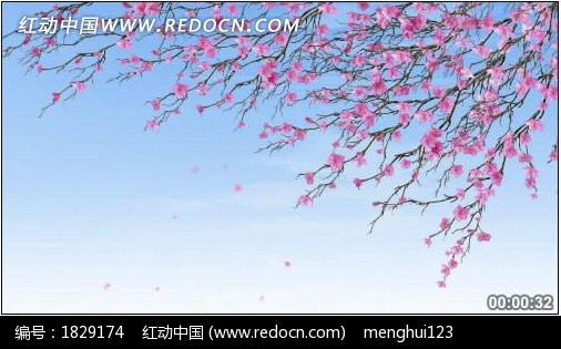 梅花花瓣飘落 高清视频素材设计模板下载