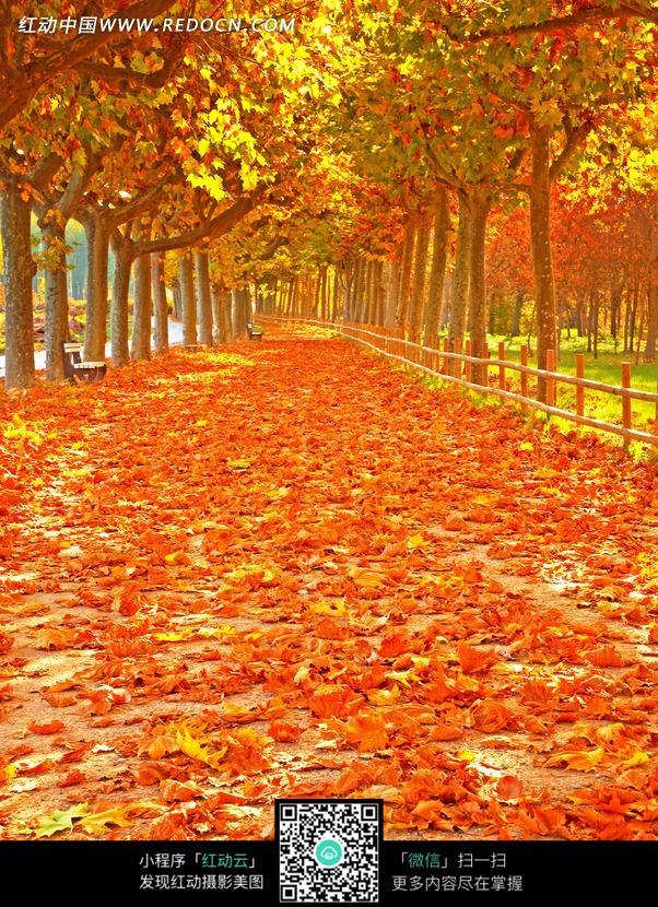 秋季景象之落满红叶的路面
